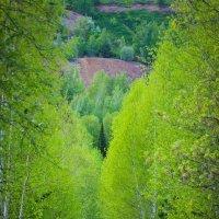 Весенняя аллея :: Никита Живаев
