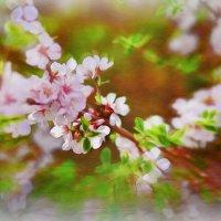 Весна :: Анна Бертман