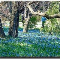 Весна в Аптекарском огороде :: Наталья (Nata-Cygan) Цыганова