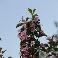 Цветочный хоровод-4. :: Руслан Грицунь