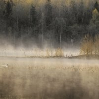 ..дыхание озера.. :: Галина Юняева