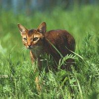 Охота :: Наташа Шамаева
