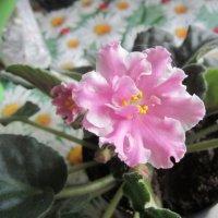 её первая весна :: надежда