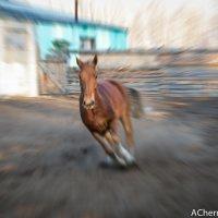 Бег :: Андрей Чернышов