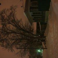 Белая ночь :: Анатолий Скурлатов