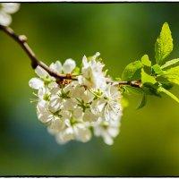 Весна :: Leo Alex Photographer
