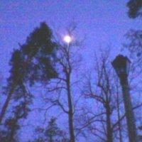 В лунном свете! :: Миша Любчик