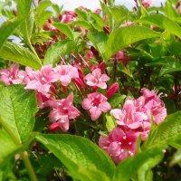 Весенних красок чудотворная краса... :: Galina Dzubina