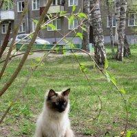 Барсик под аркой . :: Мила Бовкун