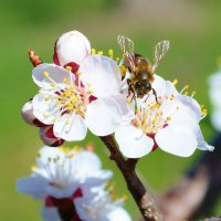 Весна :: Зизи Тимошенко