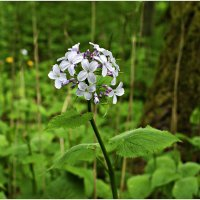 Лесной цветок. :: Валерия Комова