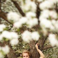 Яблоневый сад :: Станислав Истомин