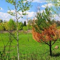 Последствия весенних поджогов :: Андрей Куприянов