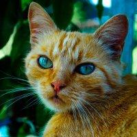Cat :: Олег Сергейчик