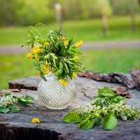 Лесные цветы :: Olga Mach