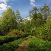 Май уже похожий на лето :: Андрей Лукьянов