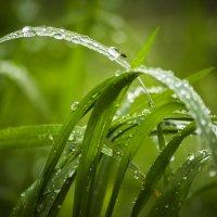 После дождя :: Алексей Бойко