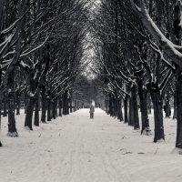 Зимняя аллея :: Сергей Швайбович