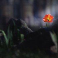 аленький цветочек) :: дмитрий посохин