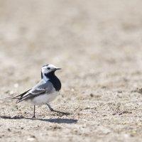 Ну, очень важная птица! :: Вадим Вайс