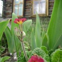 Весенние цветочки :: Анатолий