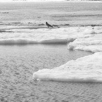 На льдине :: Ananasik XI