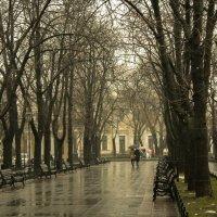 дождливая погода :: Galina Kushnir