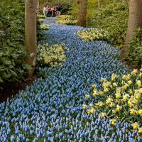 Tulips in Holland 04-2015 (14) :: Arturs Ancans