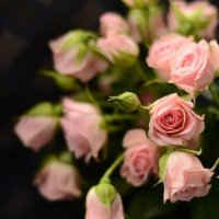 розовые розы :: Светлана Глушкова