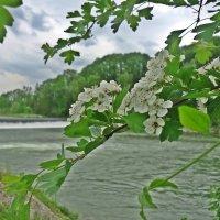 Благодать!  Весне виват!    Хочется весь мир обнять от избытка нежности... :: Galina Dzubina
