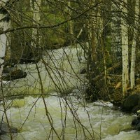 в горах тает снег ,бегут ручьи :: petyxov петухов