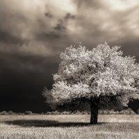 Беззащитное, в одиночестве... :: Игорь Белоконь