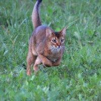 Почти кенгуру :: Наташа Шамаева