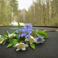 //// :: Ольга Cоломатина