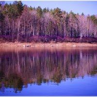 Буйство цвета на берегу Мензы :: Andrey Tsarev