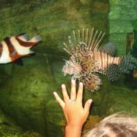 Ялтинский аквариум :: НаталиЯ ***