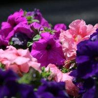 Цветочный хоровод-18. :: Руслан Грицунь