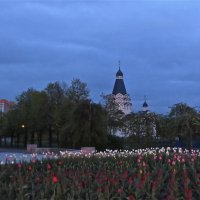 вечер с тюльпанами :: Елена