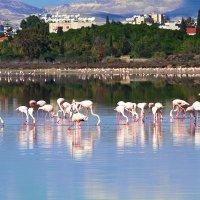 Розовый фламинго :: Nataliya Oleinik