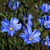 Цветы из сада Выдубицкого монастыря Фото №3 :: Владимир Бровко