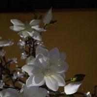 Хрустальный цветок :: Galia Rota