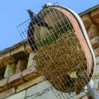 Гнездо :: Павел Живага
