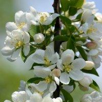 Запахло весной :: Вадим Поботаев
