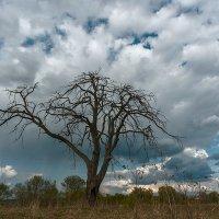 Дерево. :: Валерий Молоток