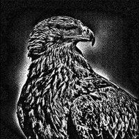 Орёл :: Nn semonov_nn