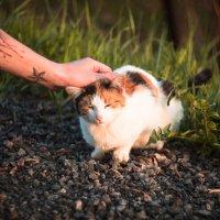 Чей-то котик :: Виктория Ходаницкая