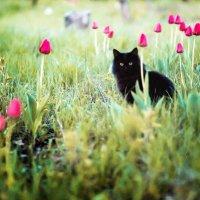 Жил да был кот... :: Сергей Судьин