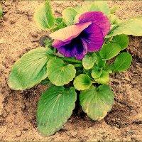 Ветер и цветы :: Фотогруппа Весна.