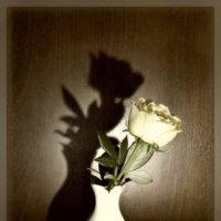 одиночество :: Ирина ***