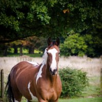 Дикая лошадь :: Boriss Sisojevs